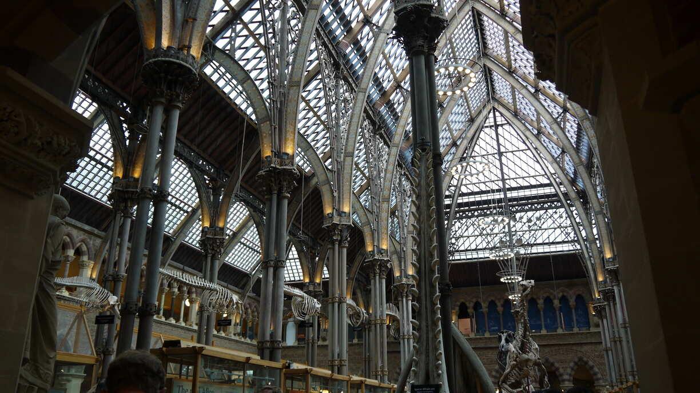 Intérieur du museum of natural history