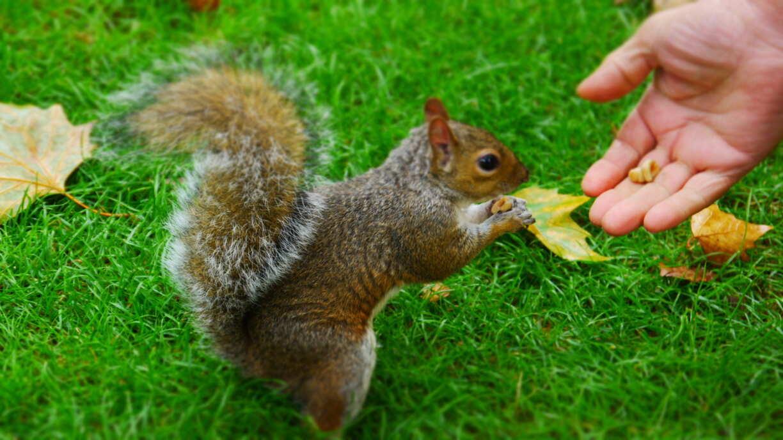 Un écureuil du parc